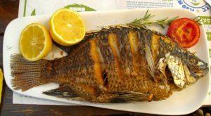 Peixe de São Pedro 1